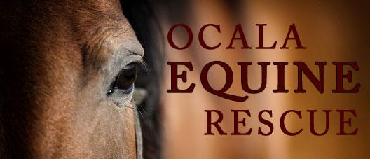 Ocala Equine Rescue Program